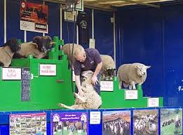 sheep fair