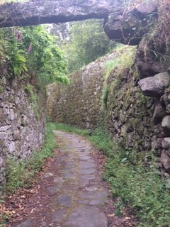 typical camino route